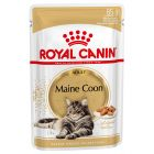 Royal Canin Maine Coon Adult en sauce