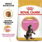 Royal Canin Maine Coon Kitten - Kattenvoer