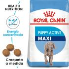 Royal Canin Maxi Puppy / Junior Active