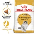 Royal Canin Norwegian Forest Cat