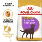 Royal Canin Sterilised Labrador Retriever Adult pour chien