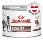 Royal Canin Veterinary Diet Feline Recovery