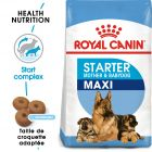 Royal Maxi Starter Mother & Babydog pour chien