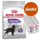 Royal Canin 8 a 10 kg pienso  + 12 x 85 sobres ¡gratis!
