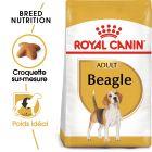 Royal Canin Beagle Adult pour chien