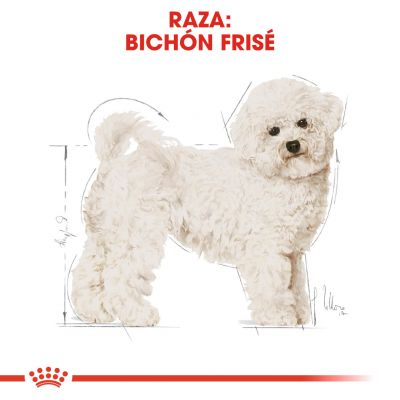 Royal Canin Bichón Frisé Adult