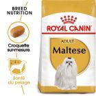 Royal Canin Bichon Maltais Adult pour chien