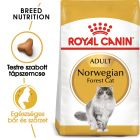 Royal Canin Breed Adult norvég erdei macska