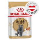 Royal Canin Breed British Shorthair Adult in Soße