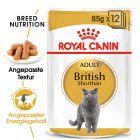 Royal Canin Breed British Shorthair Adult in Sosse