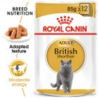 Royal Canin Breed British Shorthair Hrană umedă