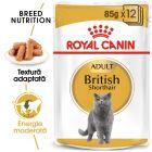 Royal Canin Breed British Shorthair Hrană umedă