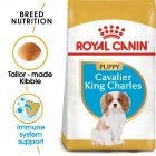 Royal Canin Breed Cavalier King Charles Puppy Hrană uscată