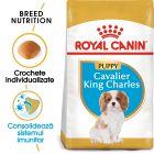 Royal Canin Breed Cavalier King Charles Puppy Hrană uscată