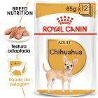Royal Canin Breed Chihuahua em saquetas