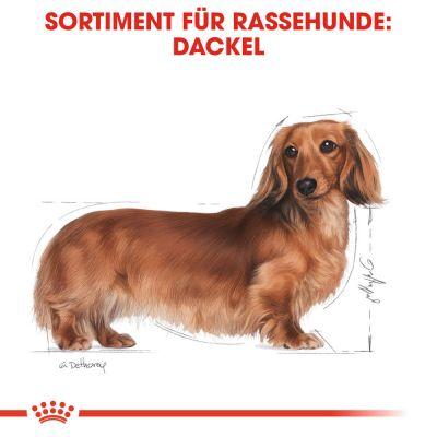 Royal Canin Breed Dachshund