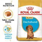 Royal Canin Breed Dachshund Puppy Hrană uscată