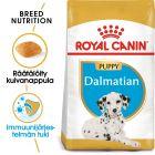 Royal Canin Breed Dalmatian Puppy