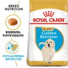 Royal Canin Breed Golden Retriever Puppy