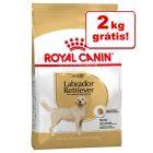Royal Canin Breed 11 kg/12 kg em promoção: 2 kg grátis!