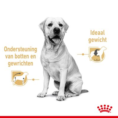 Royal Canin Breed Labrador Retriever Adult Hondenvoer