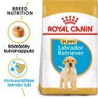 Royal Canin Breed Labrador Retriever Puppy