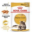 Royal Canin Breed Maine Coon Adult in Sosse