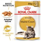 Royal Canin Breed Maine Coon Hrană umedă