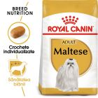 Royal Canin Breed Maltese Adult Hrană uscată