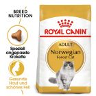Royal Canin Breed Norwegische Waldkatze Adult