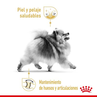 Royal Canin Breed Pomerania en sobres