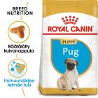 Royal Canin Breed Pug Puppy