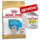 Royal Canin Breed Puppy 10 / 12 kg + 4 x 50 g Royal Canin Educ ¡gratis!