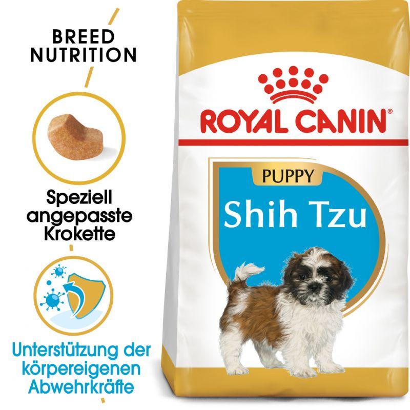 Shit Zue Puppys Goldenacresdogs Com
