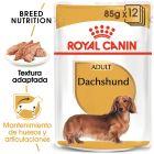 Royal Canin Breed Teckel Adult en sobres