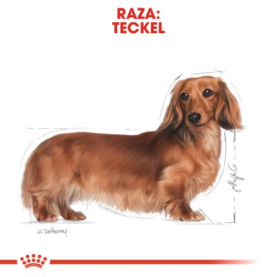 Royal Canin Breed Teckel en sobres