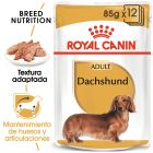 Royal Canin Breed Teckel en sobres