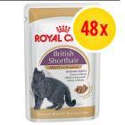Royal Canin Breed Wet Cat Food Multibuy 48 x 85g