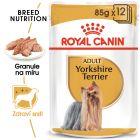 Royal Canin Breed yorkšírský teriér
