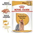 Royal Canin Breed Yorkshire Terrier Hrană umedă
