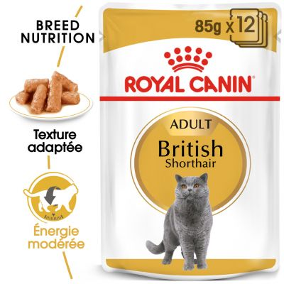 Royal Canin British Shorthair Adult en sauce pour chat