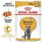 Royal Canin British Shorthair i sauce