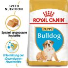 Royal Canin Bulldog Junior pour chiot