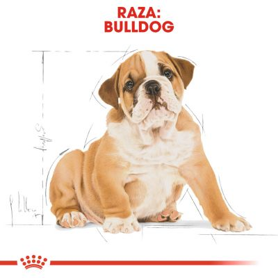 Royal Canin Bulldog Puppy