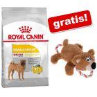 Royal Canin CARE Nutrition Hrană uscată + Urs cu sfoară jucărie pentru câini gratis!
