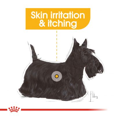 Royal Canin Care Nutrition Wet Dermacomfort