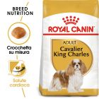 Royal Canin Cavalier King Charles Adult Crocchette per cani