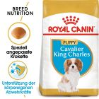 Royal Canin Cavalier King Charles Junior pour chiot