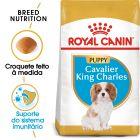 Royal Canin Cavalier King Charles Puppy/Junior