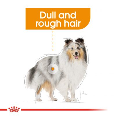 Royal Canin CCN Mini Coat Care Hrană uscată